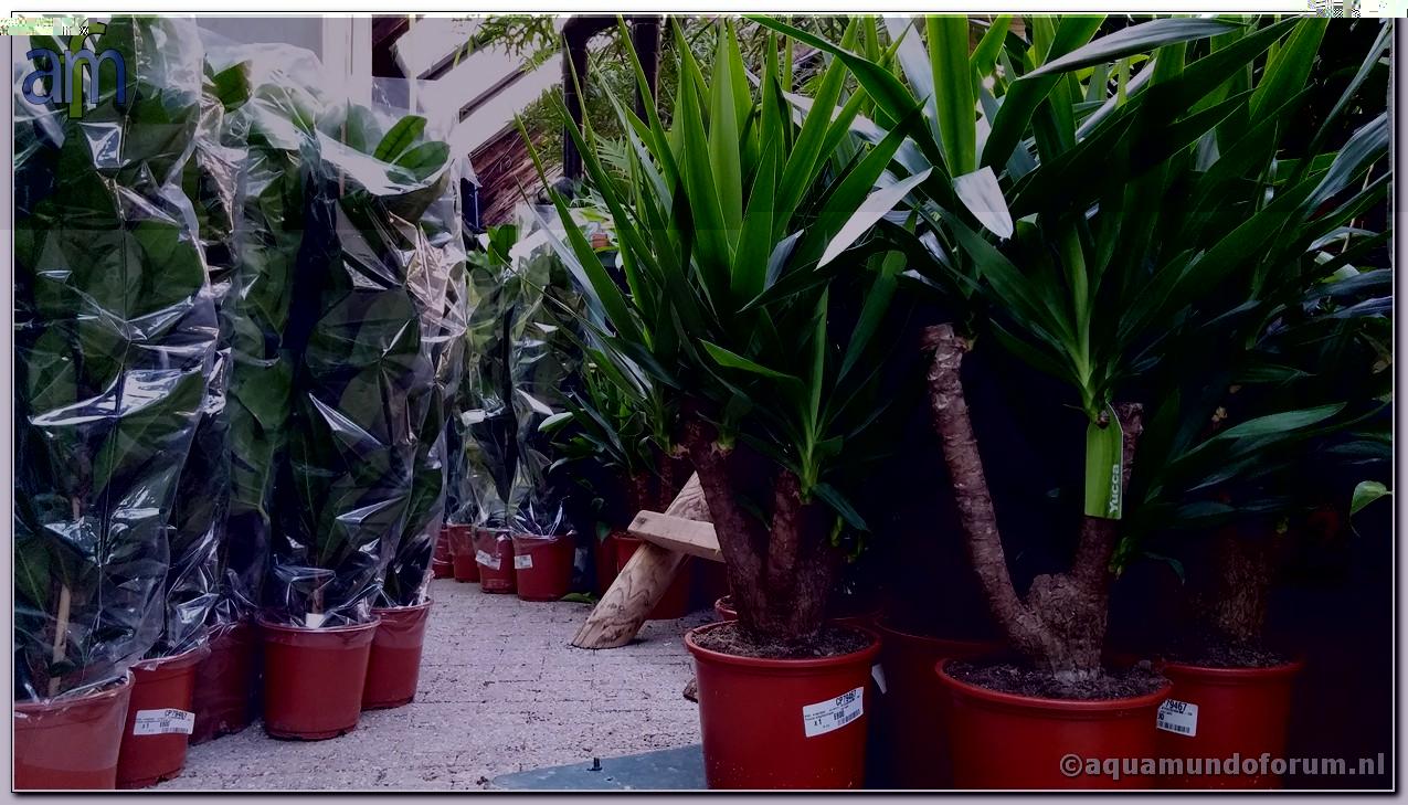 Plante Aqua Mundo@Center Parcs De Huttenheugte 4.jpg